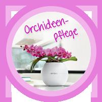 Alles rund um die Orchideenpflege
