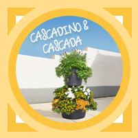 CASCADA & CASCADINO Color – Die Pflanzwunder